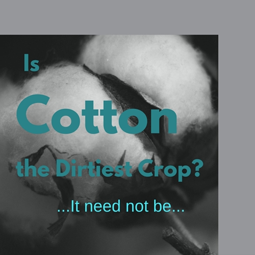 Where does cotton come from?